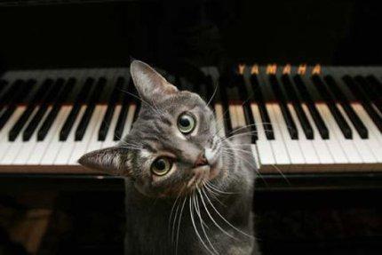 14:10 Meow!