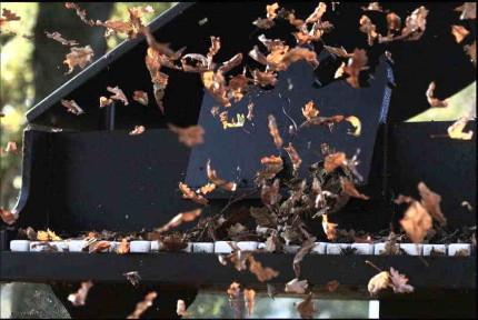 15/11 fallin' leaves